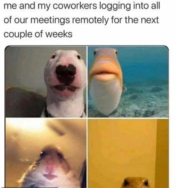 Home Office Meme